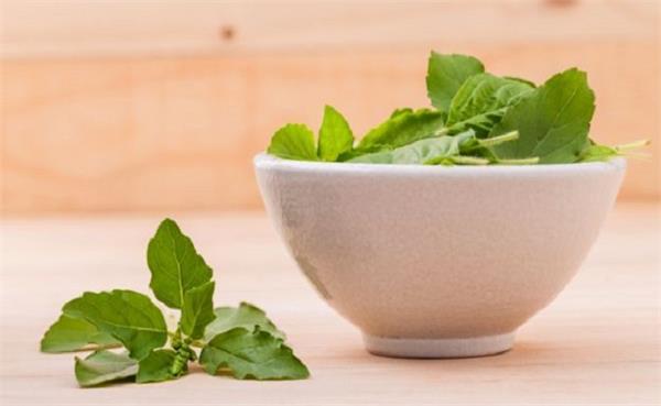 इन प्रॉब्लम में खाएं तुलसी के 4 पत्ते तुरंत मिलेगा आराम