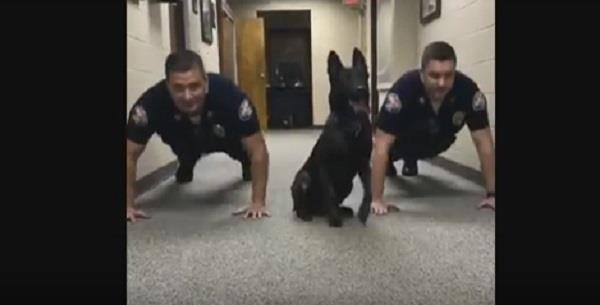 dog shows officers how to do push ups video viral