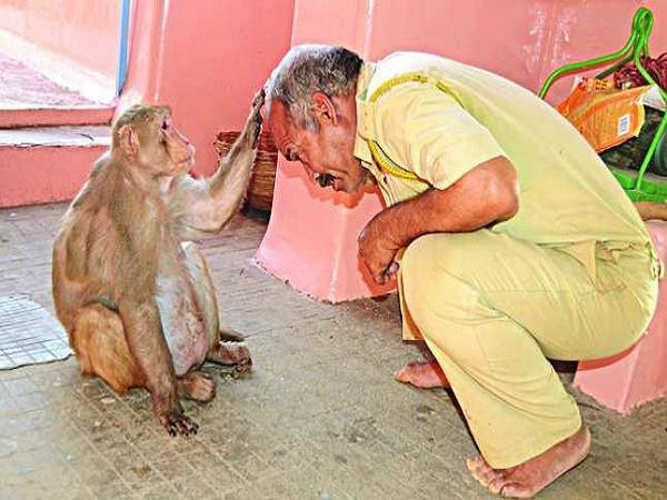here a monkey blesses devotees of hanumaan ji