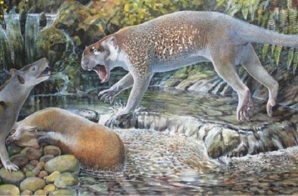extinct marsupial lion discovered in australia