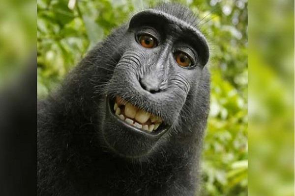indonesia  monkey  selfie