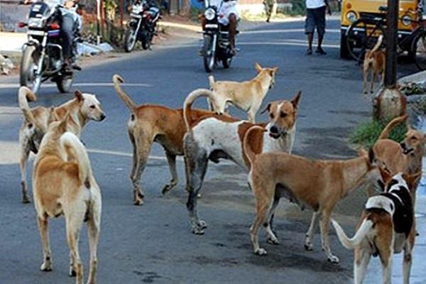 do not allow dog show  poetry jain