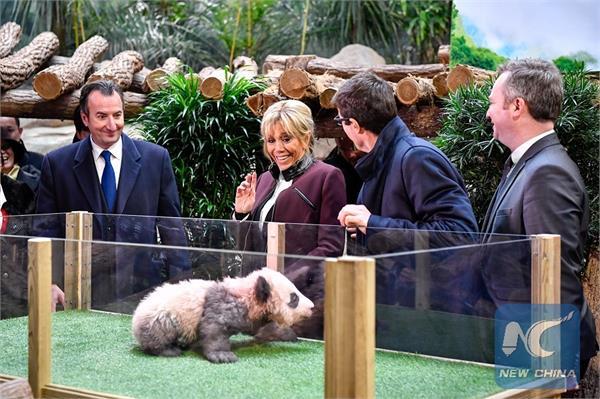 brigitte macron names france  s first baby panda