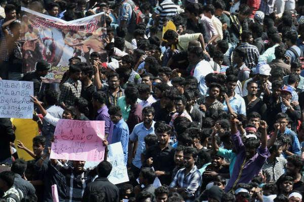 tamil nadu government has decided to bring an ordinance on jallikattu