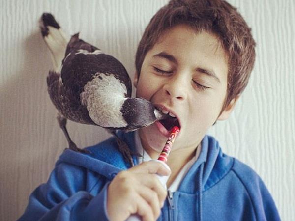 sydny  a bird lives like human