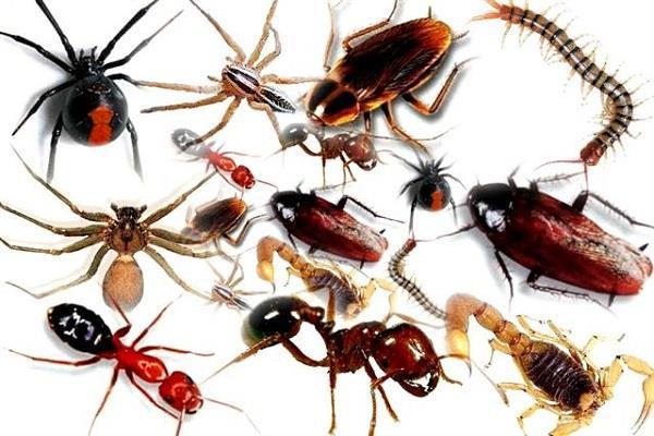 घर के कीड़े-मकौड़ों को दूर भगाने में बड़े काम के हैं ये टिप्स -  best-tips-for-insects-in-the-home - Nari Punjab Kesari
