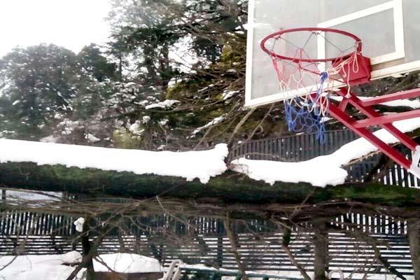 sanjauli  college  snowfall  trees  fell down  loss