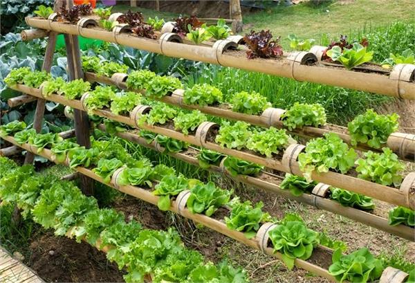घर में छोटा-सा गार्डन बनाने से मिलेंगे ये फायदे!