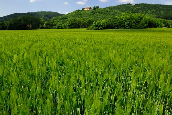 contract farming may be the law of all agricultural commodity