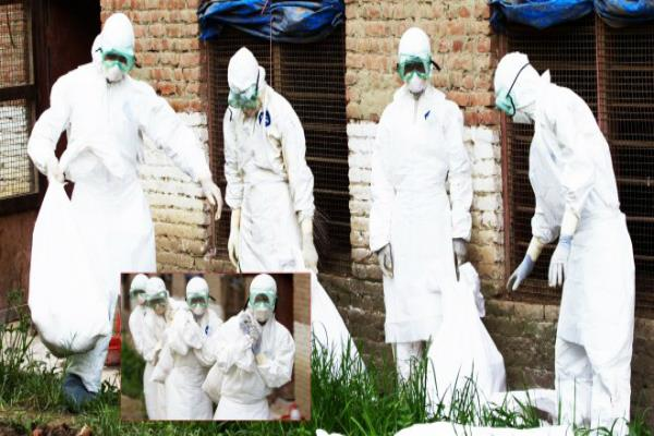 nepal reports severe h5n8 bird flu on farm