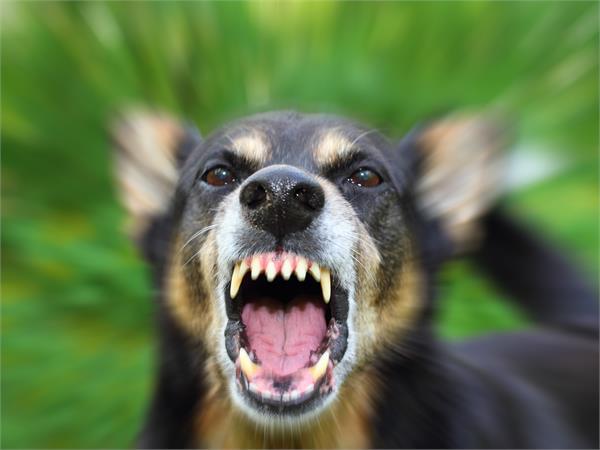 dog cut off a dozen people