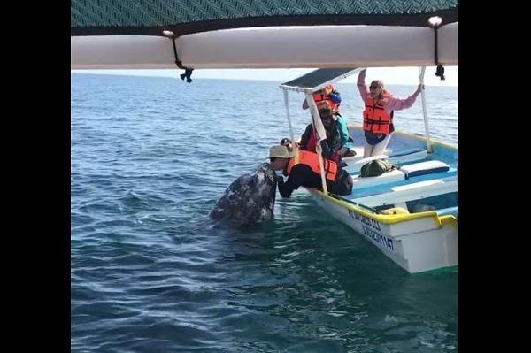 whales approach women boat