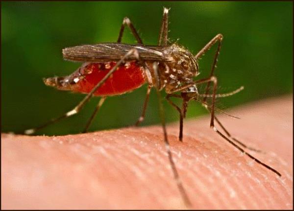 female mosquito bites more
