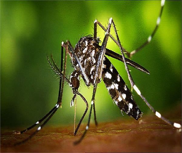 भारत में खतरनाक जीका वायरस की दस्तक, ऐसे करें बचाव