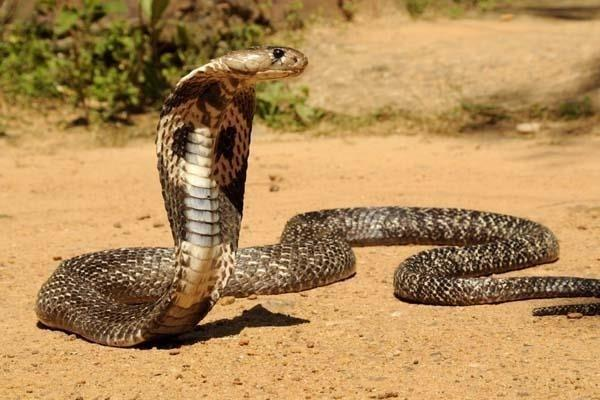 legal barriers to those who are scared of snakes in this city