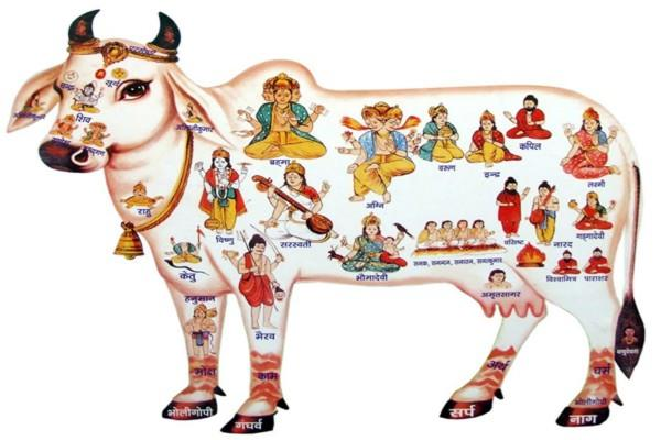 benefits of gau parikrama