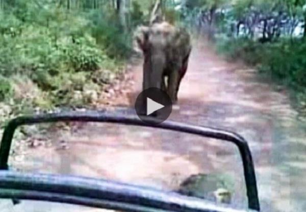 when the elephant fell behind the tourists at park