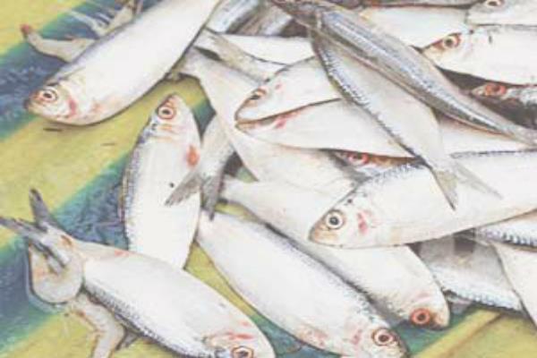 मछली पालन पर सरकार का बड़ा ऐलान