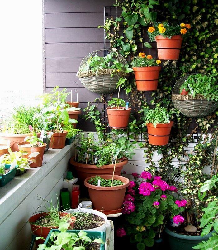 घर के गार्डन में आसानी से उगाएं ये सब्जियां