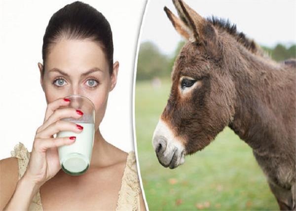 गधी के दूध से होगा इंसानों की बीमारी का इलाज! - benefits-of-donkey-milk -  Nari Punjab Kesari
