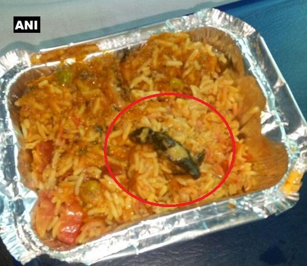 lizard found in food in poorva express utter pradesh