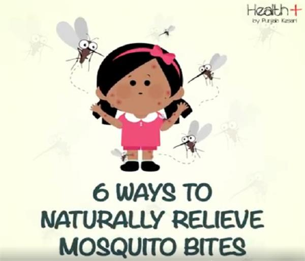 get home remedies immediately on mosquito bites  get relief
