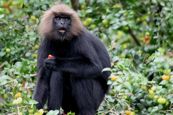 50 000 people in dark due to langur