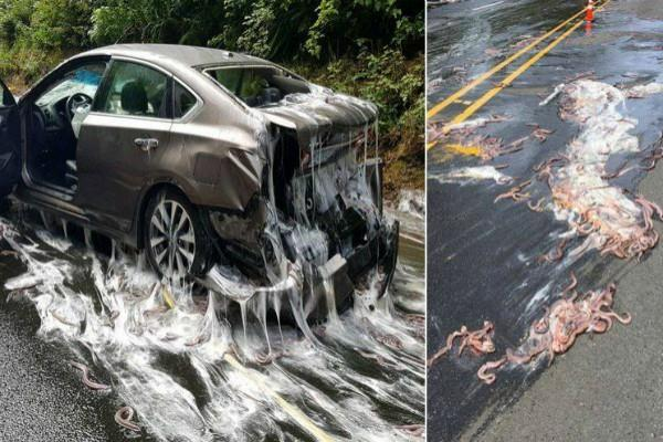 truck carrying slime eels overturns coating cars and highway