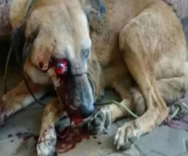 traffic marshal kills the dog in the market by pressing it with the feet