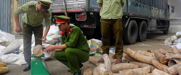 3 tons of ivory smuggled from south africa  seized in vietnam