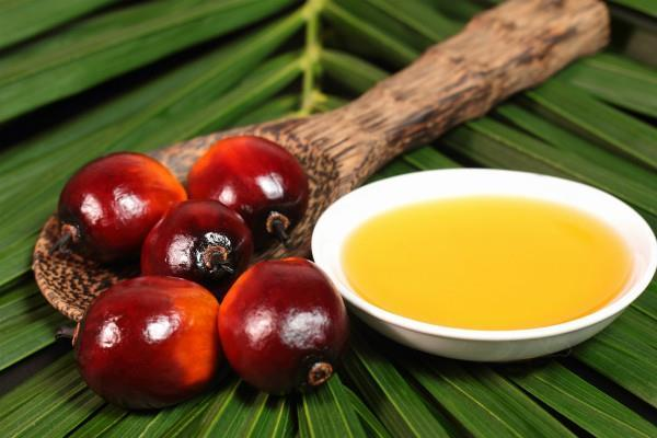 crude palm oil prices fall