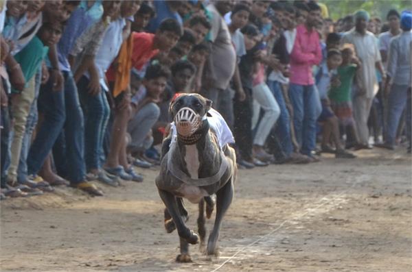 dog race  more exciting than kabaddi