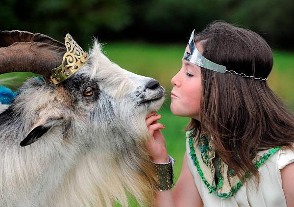 a goat has been crowned king in irish town