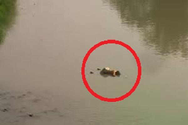 dam in floating mile female corpse spread sensation