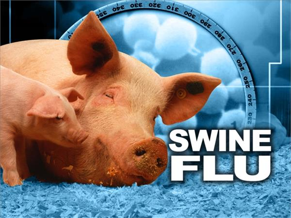 swine flu continues in this district of up  so far 10 people have died