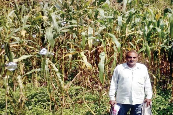 farmer found new trick to save crop from monkeys  surprise to know the way