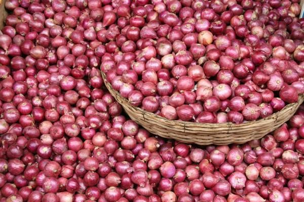 2 400 tonnes of onion imported from egypt to curb prices