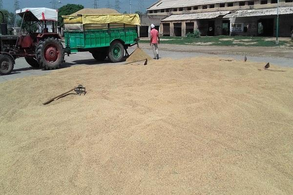 punjab government raises 2  market fee on crop purchase