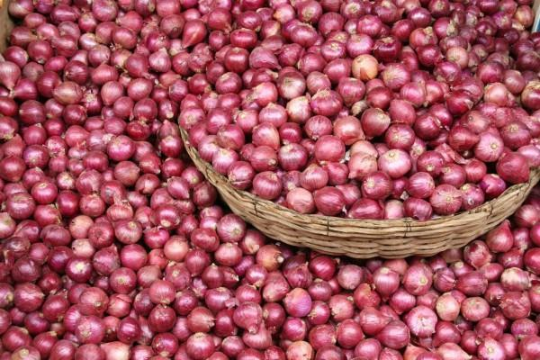government tightens on onion hoarding