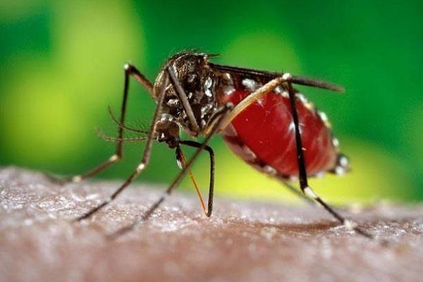 be cautious with diseases such as dengue