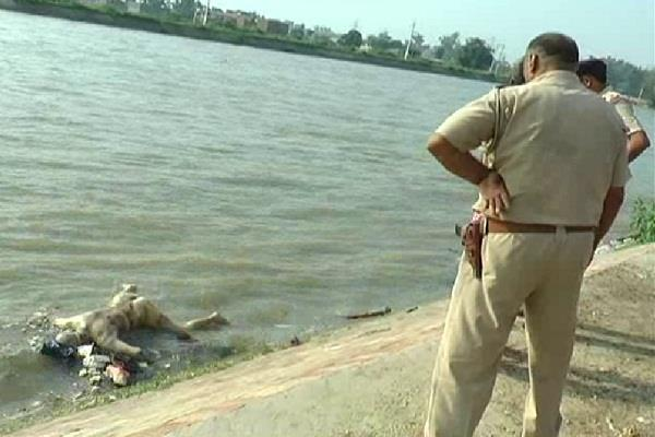 youth found dead in canal shore