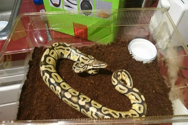 snake found in laundry room charms calgary man
