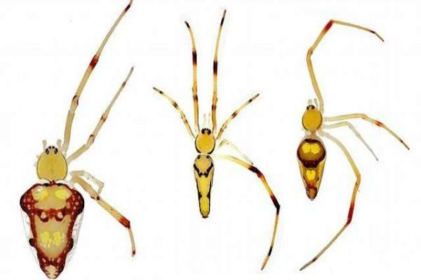 new spider species named after obamas  dicaprio