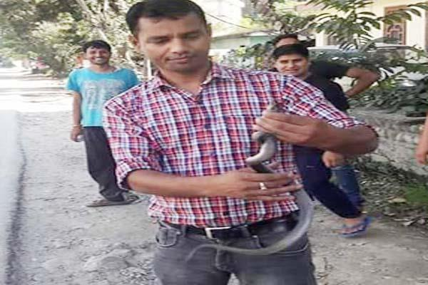 kullu  snake  sonu  caught  mastered