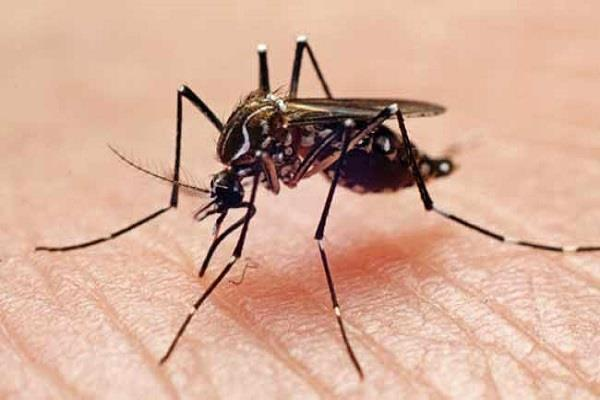 number of dengue patients reached 19