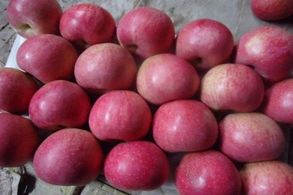 india go back supplied apples reaching kalayat