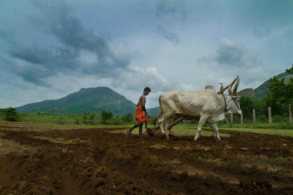 farmers issues can solve by better productivity