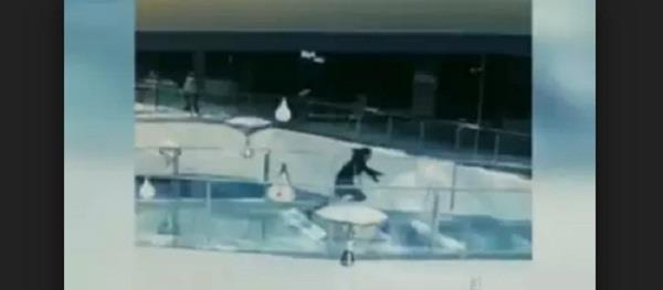 chinese woman falls into shark tank at feeding time