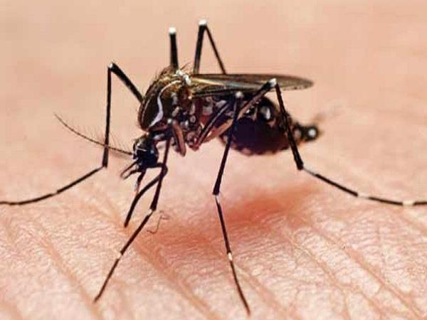 government ensures ensured health benefits of dengue affected people