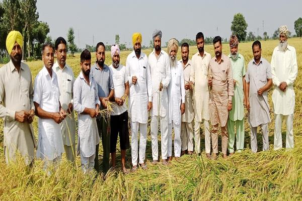 havoc due to heavy loss of crops of farmers